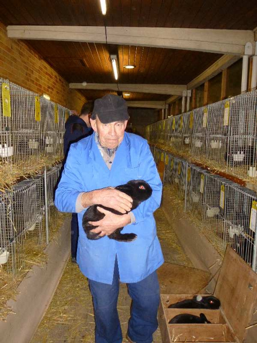 2. Platz Kaninchen Aktive